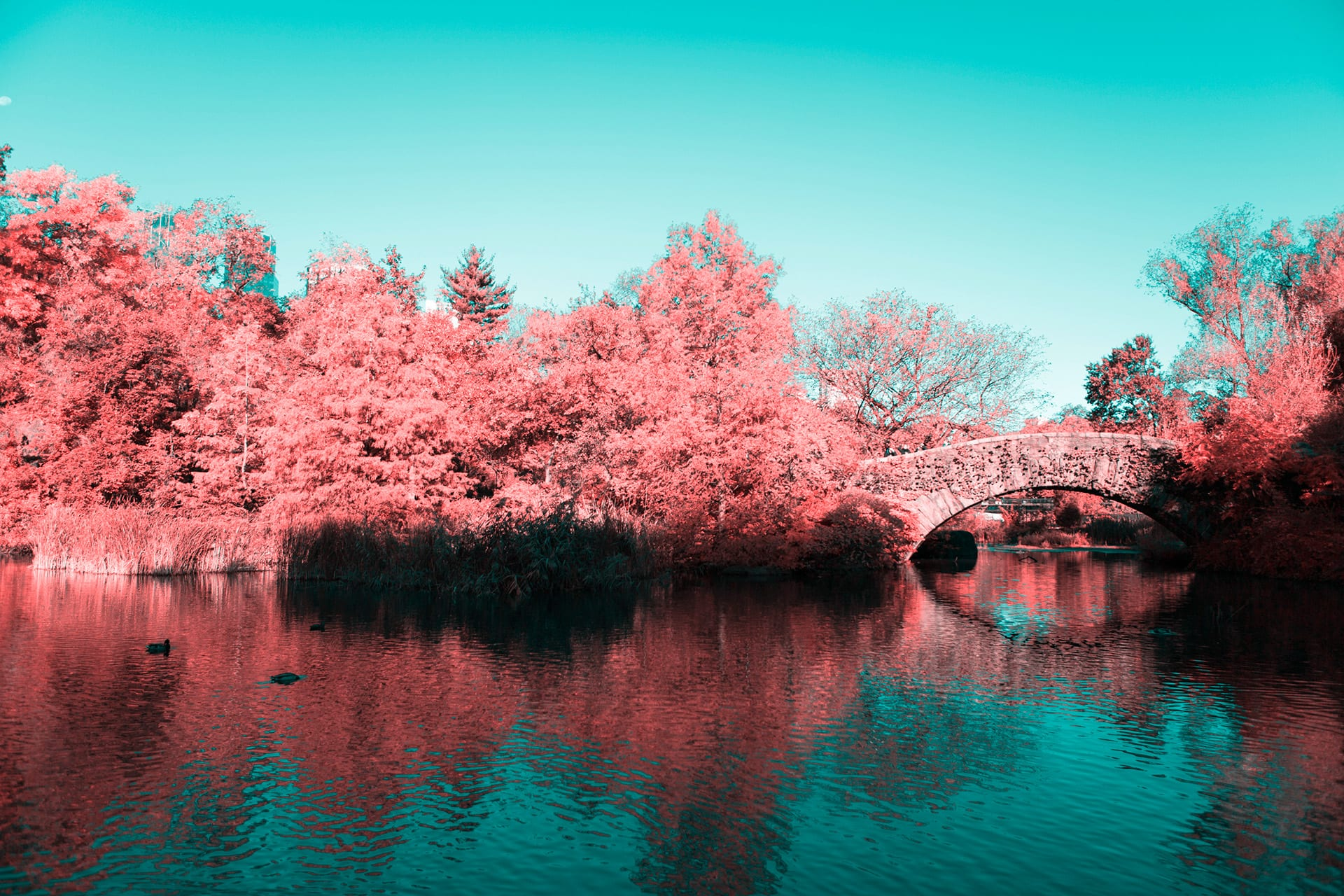 Infrared NYC Photography - Pink Central Park