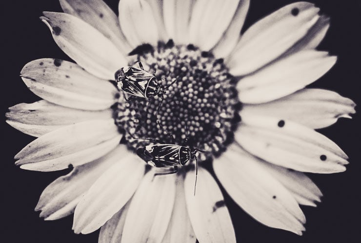 Black and White Lightroom Preset by Lookfilter