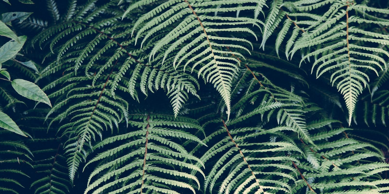 creative commons fern image
