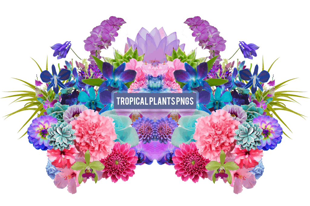 Tropical Plant PNG's