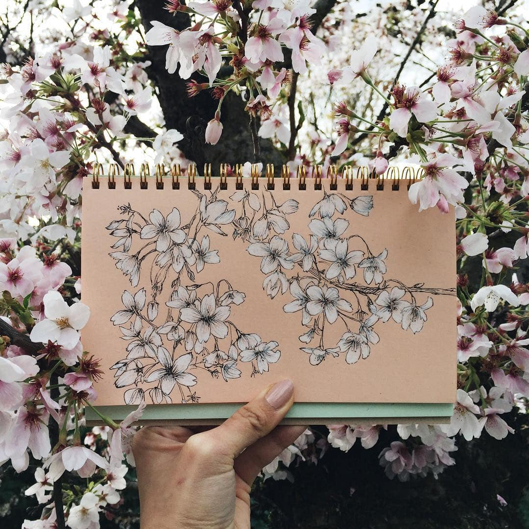 Cherry Blossom by Hannah Jesus
