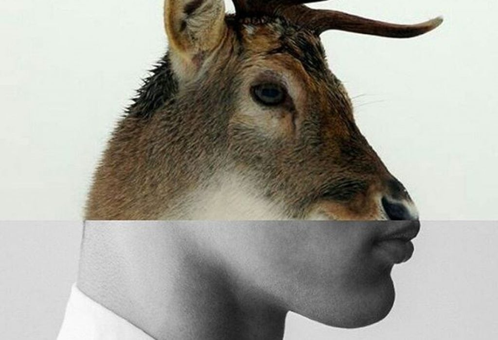 Deer Photo Collage by Naro Pinosa