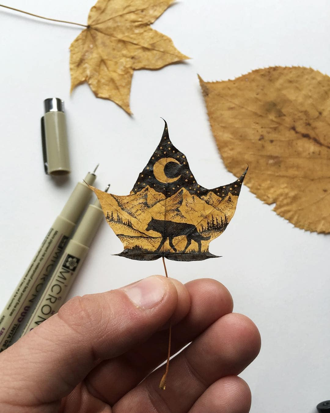 Inkon Leaf Hand-Drawn Nature-Themed Illustrations by Sam Larson