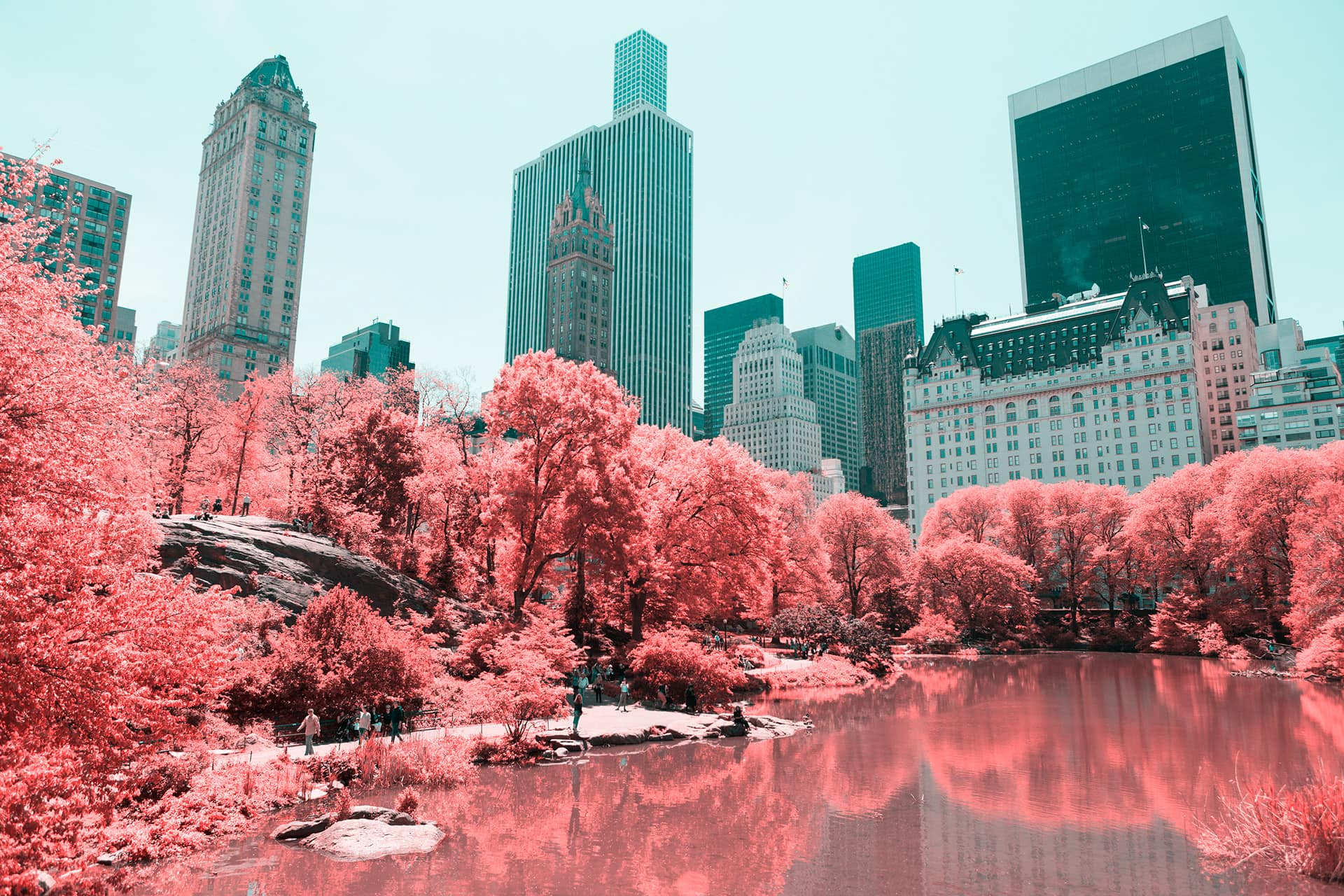 New York Central Park Pink Photography