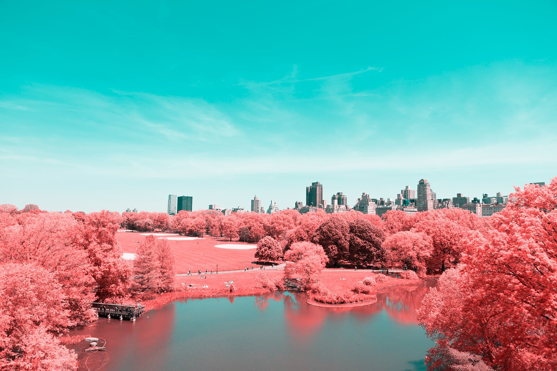 NYC Pink Central Park
