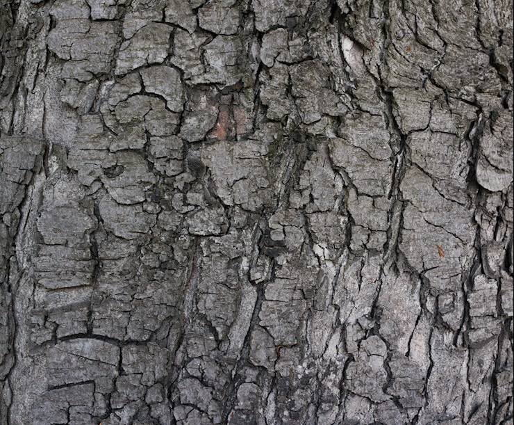 grey-tree-bark-texture