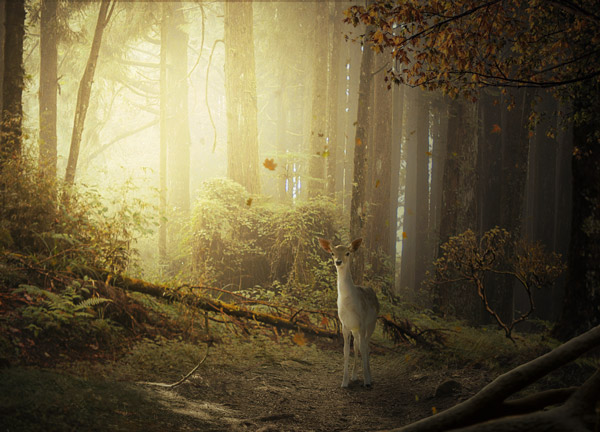 photo-manipulation-create-a-fantasy-deer-photo-manipulation-in-photoshop
